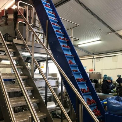 UPM Elevator conveyor transferring loose leaf product ; chillies ; and vegetables / fruit at a rate of 2000kgs/hr to a height of 5.8m for feeding a multi head weigher and bagger with pressure wash down specification.